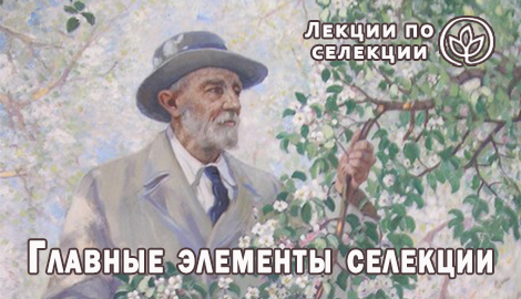 """Лекции по селекции: """"Главные элементы селекции"""""""