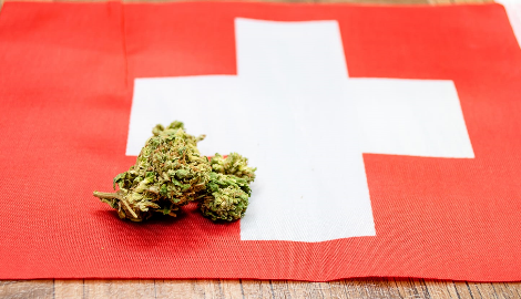 Швейцарии нужна медицинская реформа каннабиса