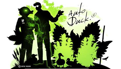 Блог Dutch Passion: Идеальный для городского выращивания Auto Duck