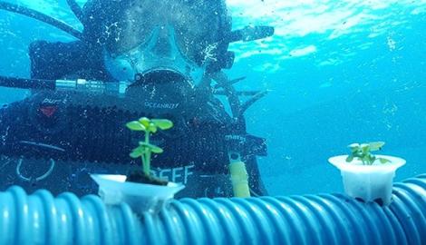 У берегов Италии под водой вырастили овощи и лечебные травы