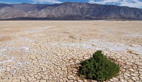 Выращивание растений в пустыне