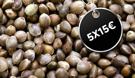 Trikoma Seeds: 5х15 евро? Маловато будет!