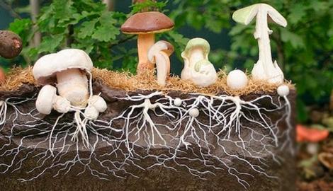 Российские ученые из грибов сделают искусственный нос