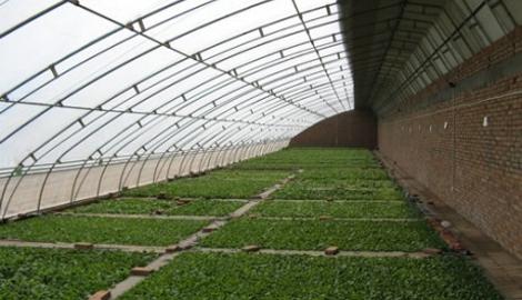 На Алтае строится уникальный солнечный вегетарий
