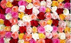 А роза упала на лапу Азора