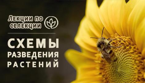 """Лекции по селекции: """"Схемы разведения растений"""""""