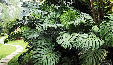 Зачем тропическим растениям нужны большие листья?