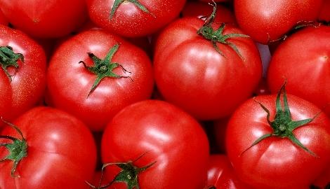 Сити-фермеры Мордовии собрали первый урожай томатов