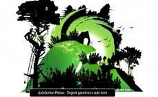 Блог Dutch Passion: Обзор AutoDurban Poison от Dutch Passion. Выращивать дома просто
