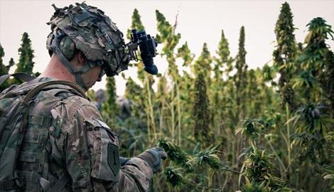 В США одобрили законопроект о медицинской марихуане для ветеранов