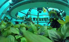 В морской пучине: о том, как базилик, клубника и салатик растут себе под водой