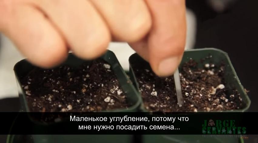 Хорхе Сервантес: Проращивание и посадка семян. Как посадить семена