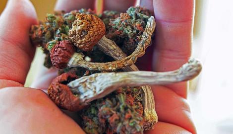 Что такое наркотики Списка №1?