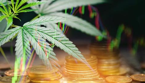 К 2025 году мировые продажи легальной марихуаны составят 40% рынка