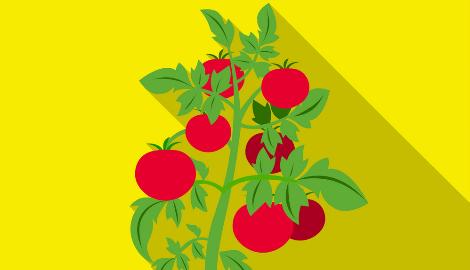 Наука и искусство представляют - томаты будущего