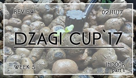 Новости DzagiCup17: Обзор индора и всего остального. Ч.1