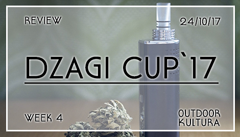 Обзор DzagiCup17: Аут и Культура. Неделя 4