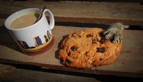Попробуй еще этих плотных американских печенек да выпей чаю!