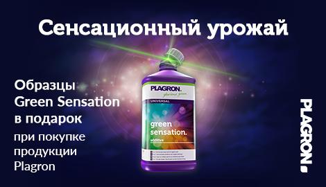Plagron Green Sensation – сенсационный урожай!
