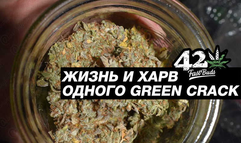 Жизнь и харв одного Green Crack