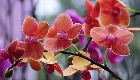 Как вырастить прекрасные орхидеи