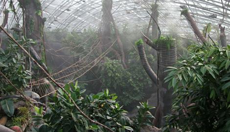 Добро пожаловать в джунгли!