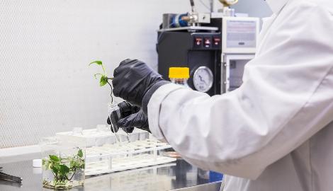 Ученые создали технику ускоряющую селекцию семян
