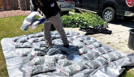 Легальная марихуана наносит реальный ущерб мексиканским картелям