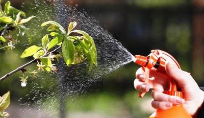 Защита овощных культур без химикатов