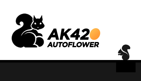 Seed Stockers: AK420 Autoflower в индоре под LED