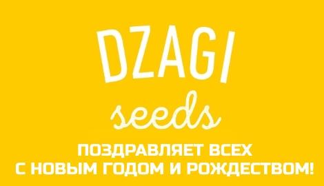 DzagiSeeds 2.0: Поздравления и итоги года
