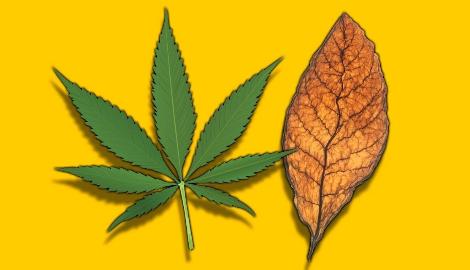 Американцы считают, что марихуана безопаснее, чем вейп или табак