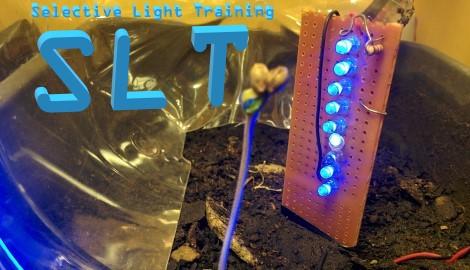 Как селективный световой тренинг действует на растения