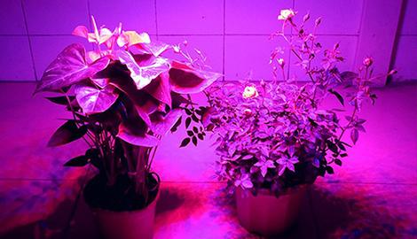 Свет для растений и как его использовать