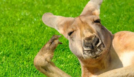 Австралия рассматривает вопрос легализации МДМА