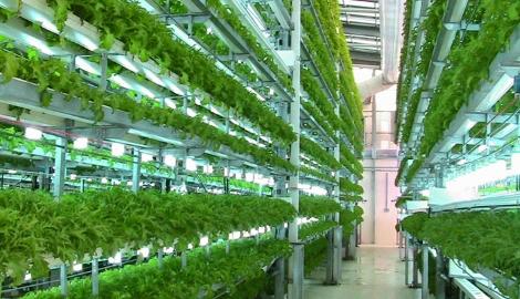 Пермякам предложили заняться вертикальными фермами