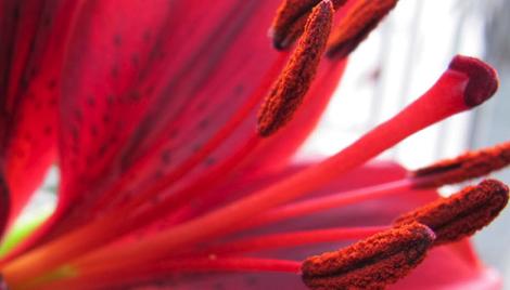 Влияние красного и дальнего красного света на цветение