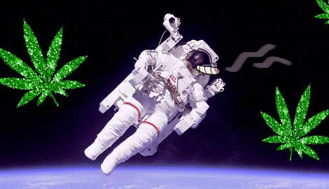 Будет ли каннабис мутировать в космосе?