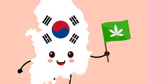 Южная Корея легализовала медицинскую mj