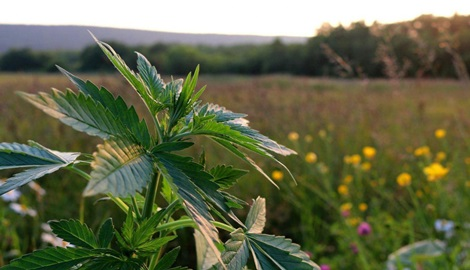 Как сохранить урожай в аутдоре?