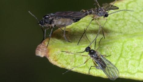 Проблемы растений: откуда появляются грибные комарики и как избавиться от них