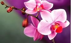 Джери Хармс. Орхидеи и гидропоника