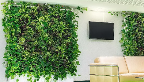 Какие вьющиеся растения можно поселить у себя дома