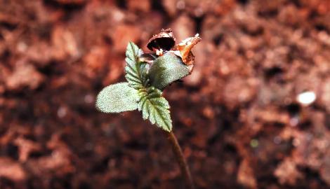 Видео: Ускоренная съемка роста и движения каннабиса