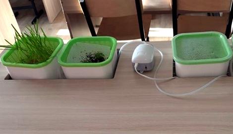 Карагандинские школьники изучают гидропонику