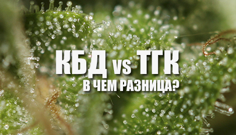 ТГК и КБД: в чем разница?