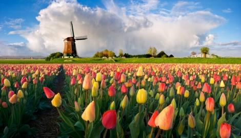 В Нидерландах будет рассмотрен вопрос полной легализации
