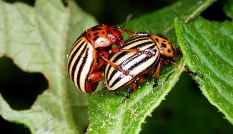 Французы придумали, как обнаружить насекомых – вредителей