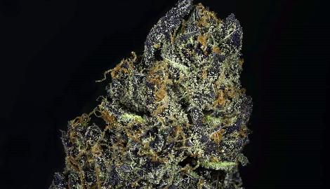 В США вырастили марихуану с самым высоким содержанием ТГК