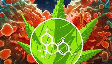 Блог Paradise Seeds: 3 совета тем, кто решил лечиться медицинскимканнабисом
